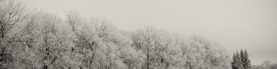 51_White